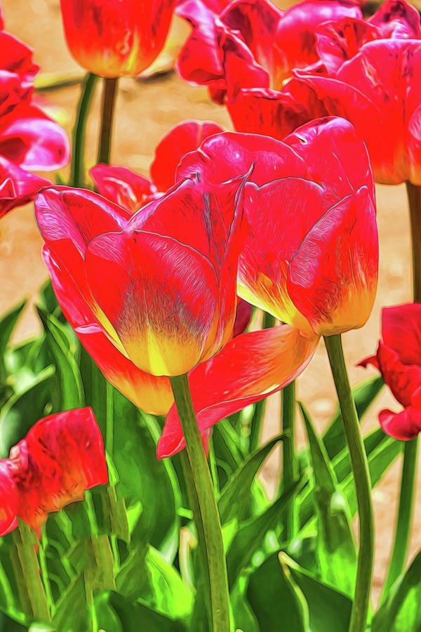 Holland Ridge Tulip Farm # 18 by Allen Beatty