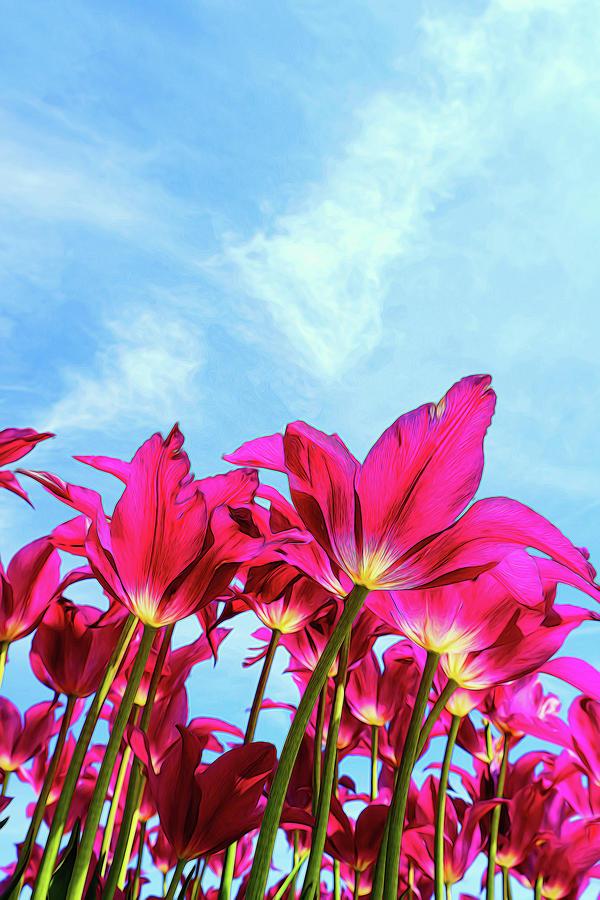 Holland Ridge Tulip Farm # 20 by Allen Beatty