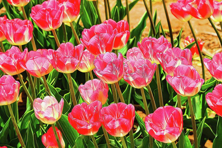 Holland Ridge Tulip Farm # 21 by Allen Beatty