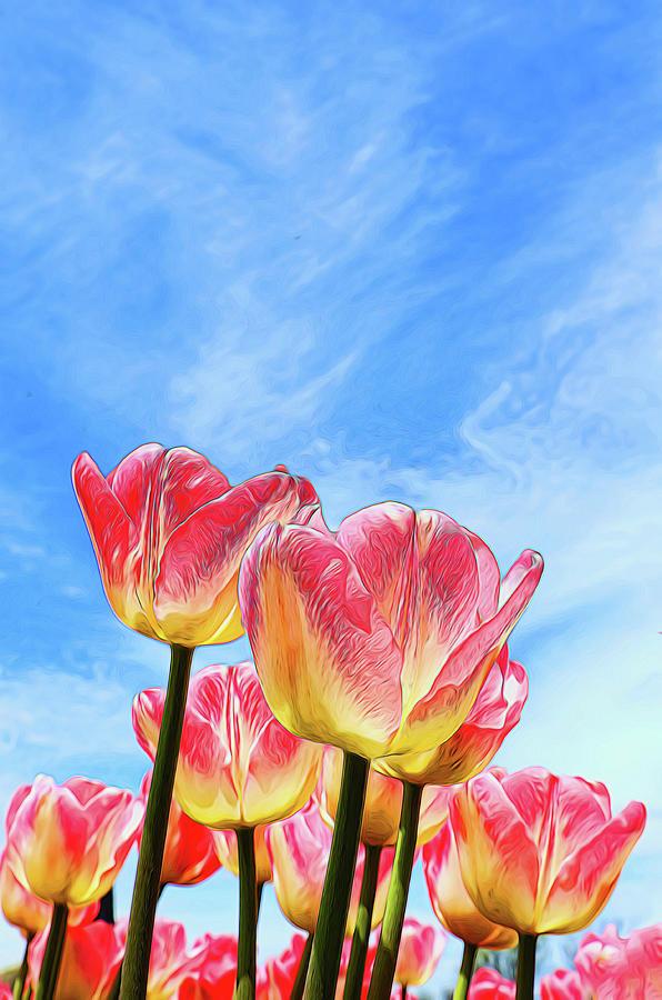 Holland Ridge Tulip Farm # 22 by Allen Beatty