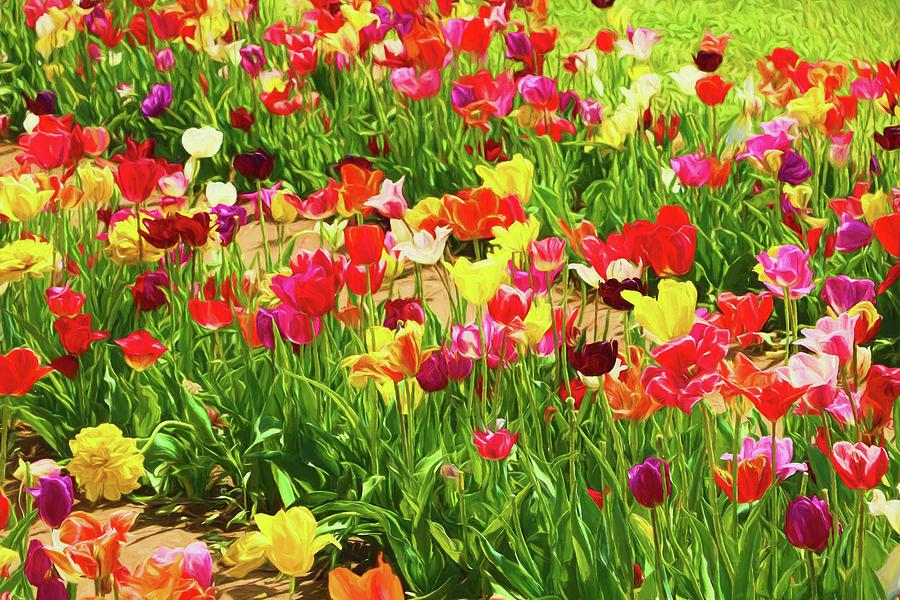 Holland Ridge Tulip Farm # 23 by Allen Beatty