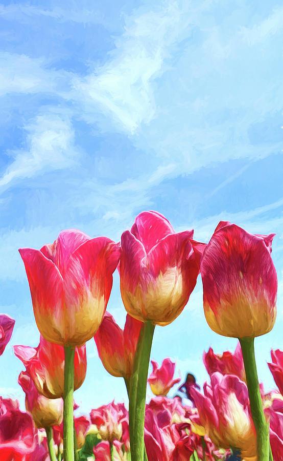 Holland Ridge Tulip Farm # 24 by Allen Beatty