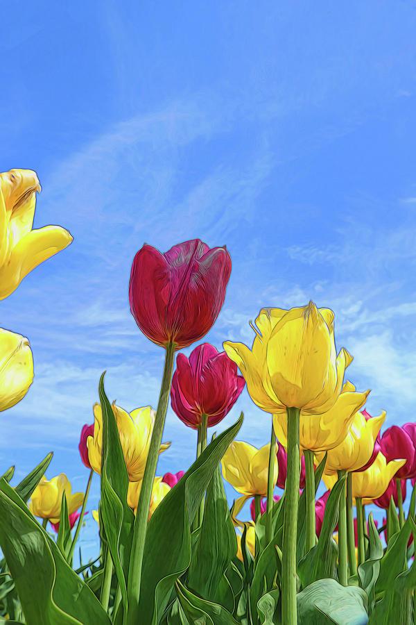 Holland Ridge Tulip Farm # 28 by Allen Beatty