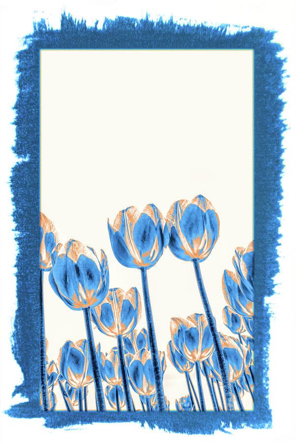 Holland Ridge Tulip Farm # 30 by Allen Beatty