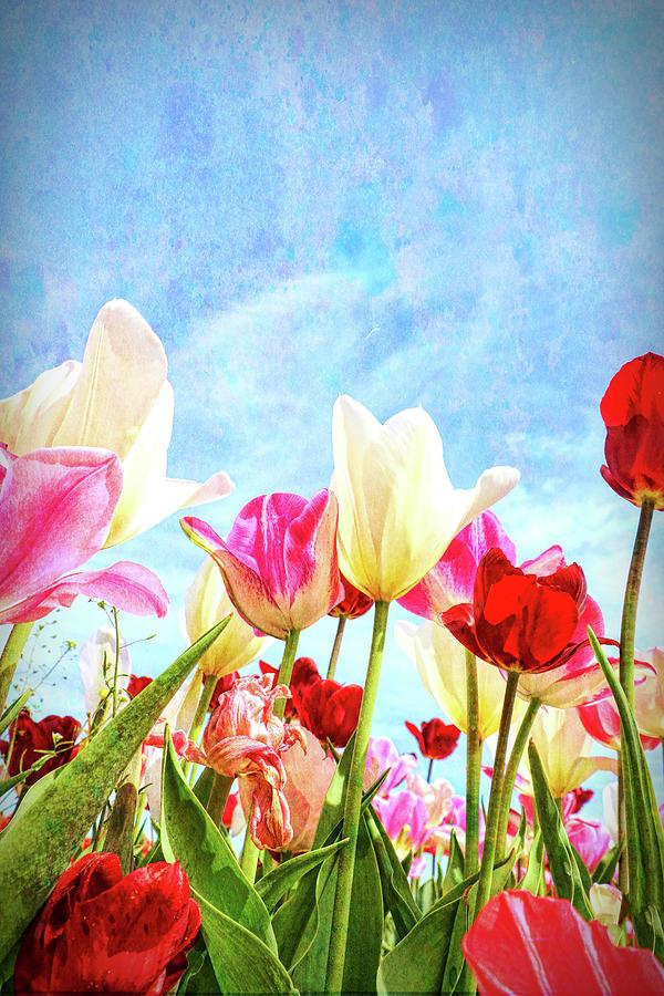 Holland Ridge Tulip Farm # 31 by Allen Beatty