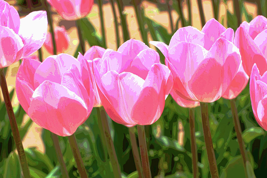Holland Ridge Tulip Farm # 32 by Allen Beatty