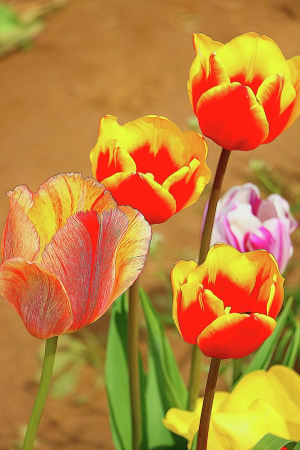 Holland Ridge Tulip Farm # 34 by Allen Beatty