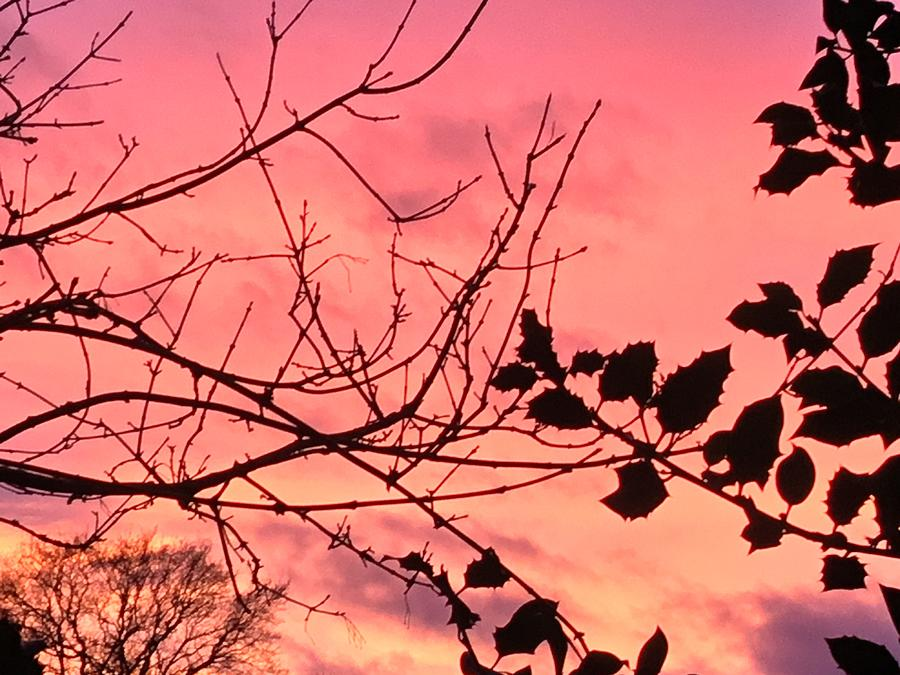 Holly Photograph - Holly tree sunset 2 landscape by Itsonlythemoon -