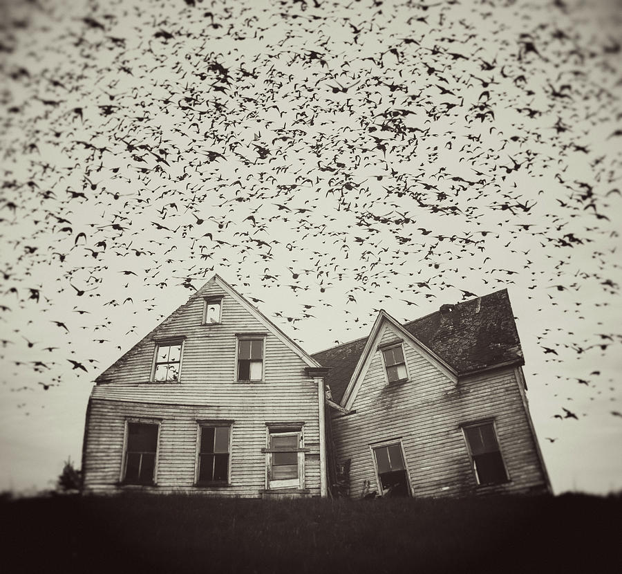Home Of Murmuration Photograph by Shaunl