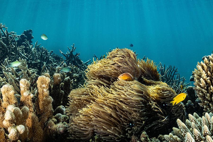 Underwater Photograph - Home by Serge Melesan