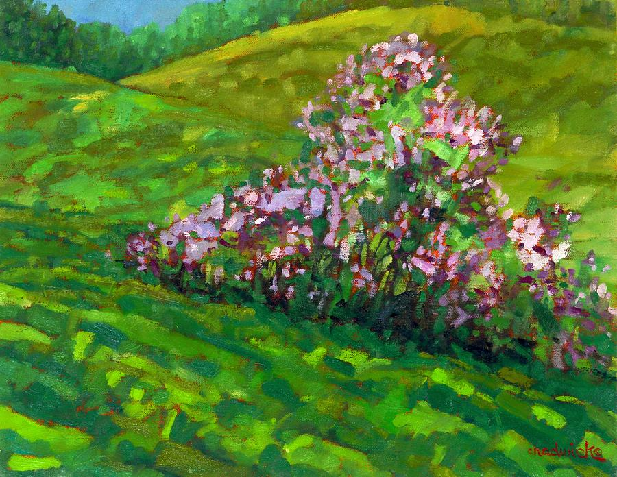 Homestead Lilacs by Phil Chadwick