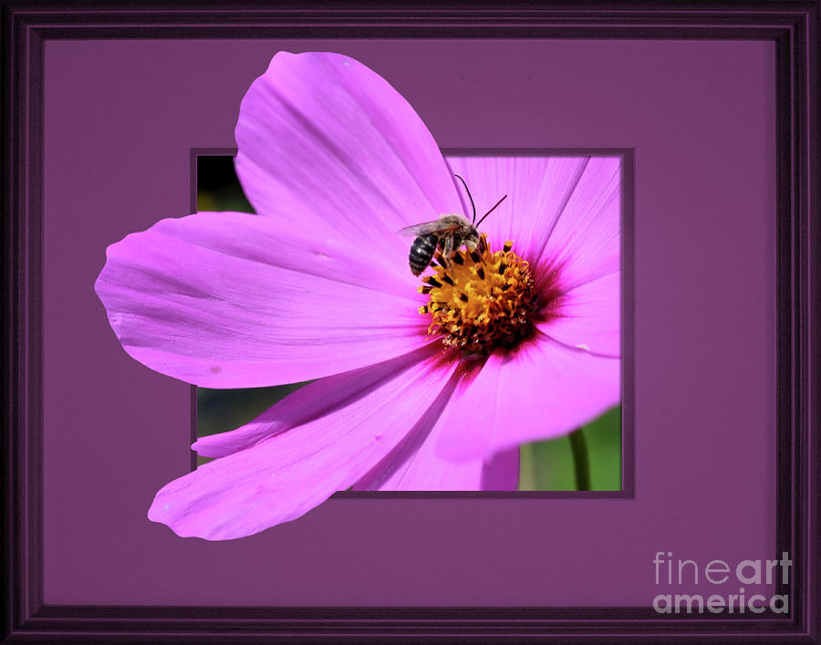 Honey Bee On Pink by Smilin Eyes  Treasures