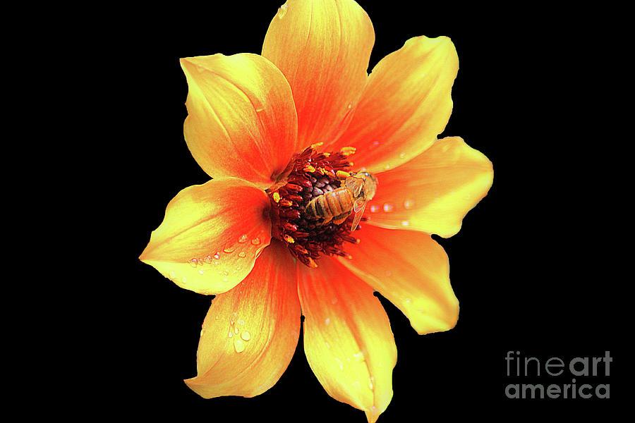 Honey Bee by Patti Whitten