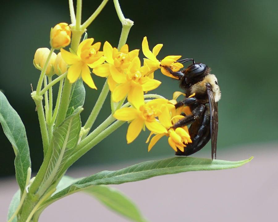 Honey Bee by Sarah Hanley