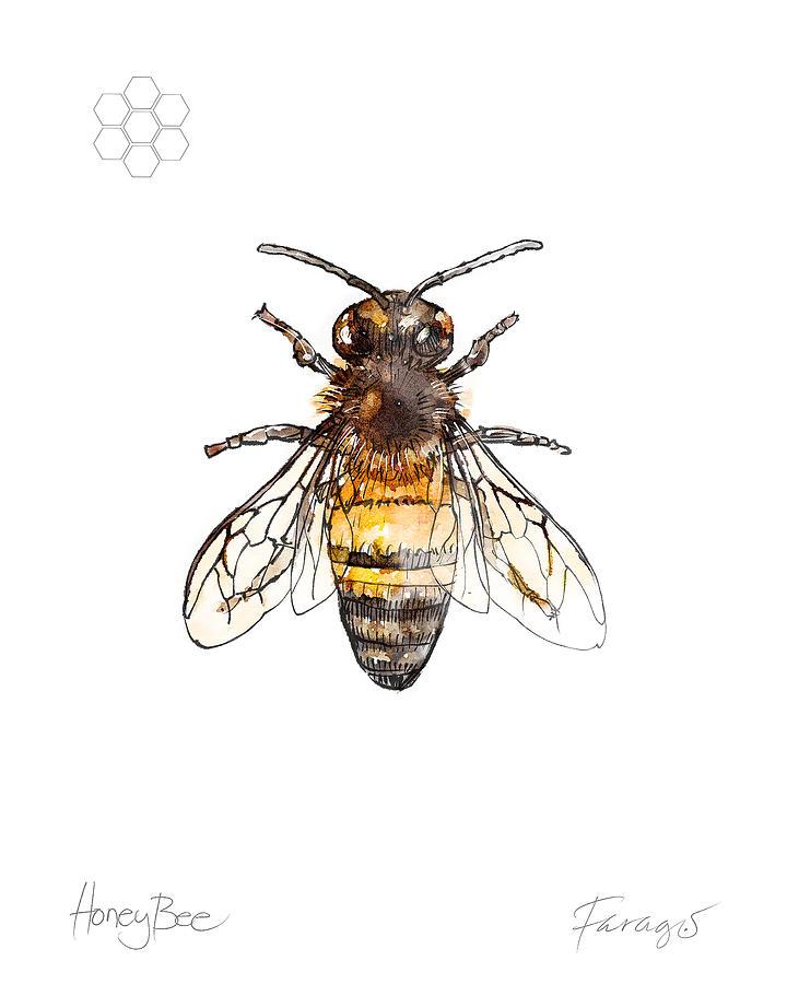 Honeybee Drawing - HoneyBee by Peter Farago