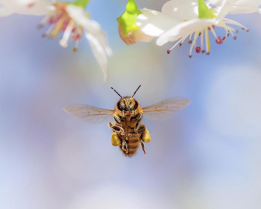 Honeybee Suspended on Air by Gary Kochel