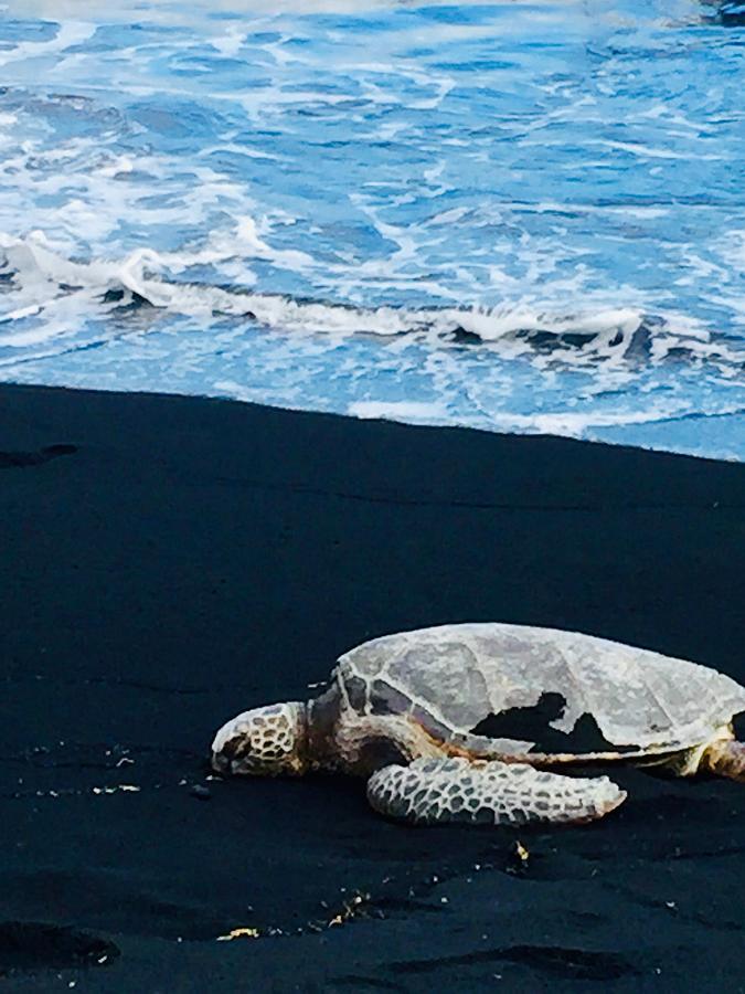 Honu Green Sea turtle  Pohoiki Beach by Lehua Pekelo-Stearns