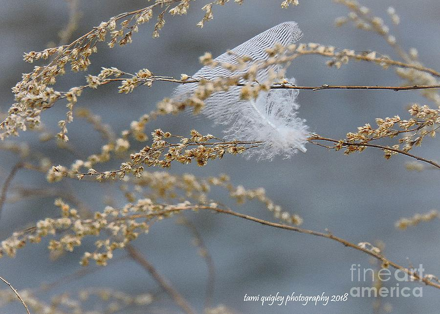 Hope Is The Thing With Feathers by Tami Quigley
