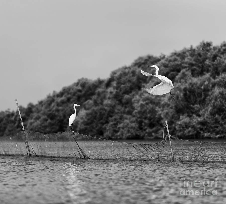 Love Photograph - Horizontal Vivid Black And White Stork by Spacedrone808
