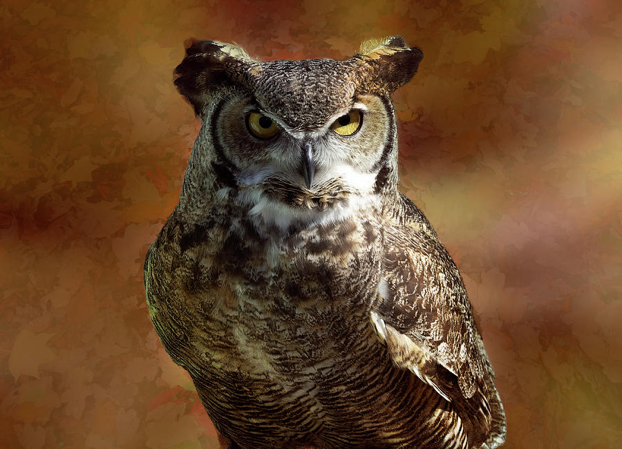 Horned Owl Photograph