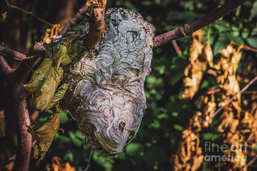 Hornet's Hive in a Summer Forest.  by Stephen Geisel