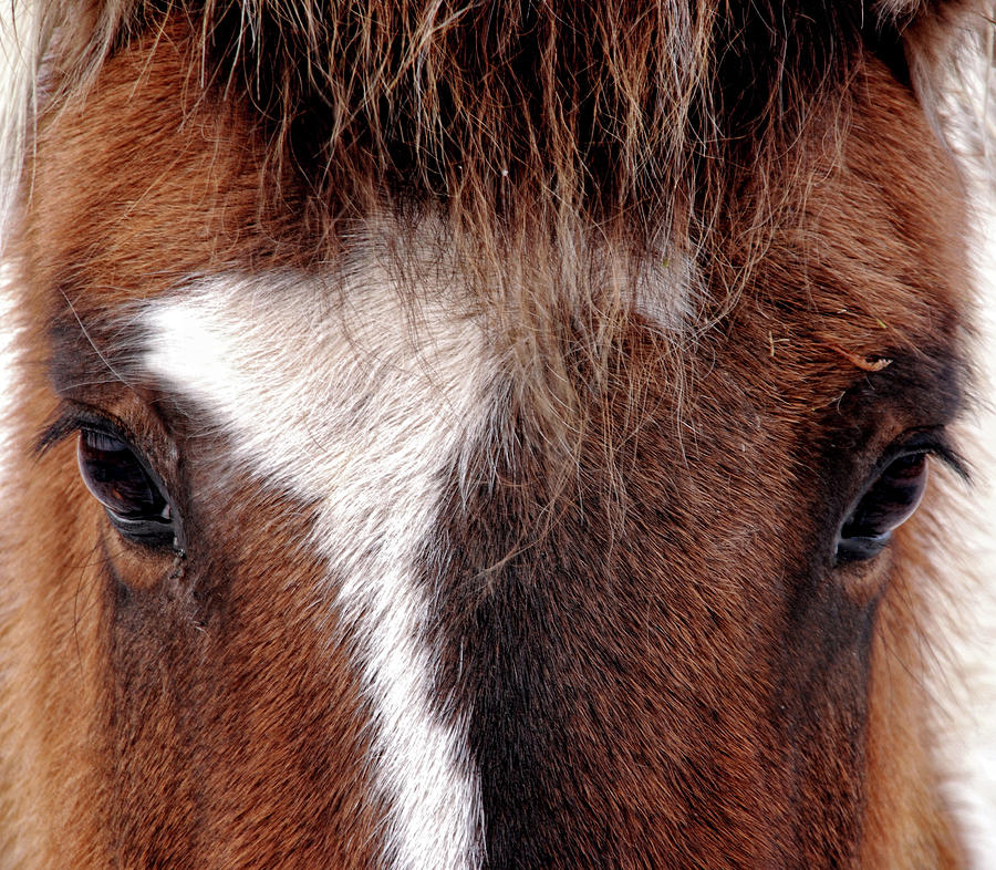 Horse Photograph by Abe