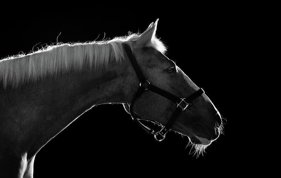 Horse Photograph by Arman Zhenikeyev - Professional Photographer From Kazakhstan