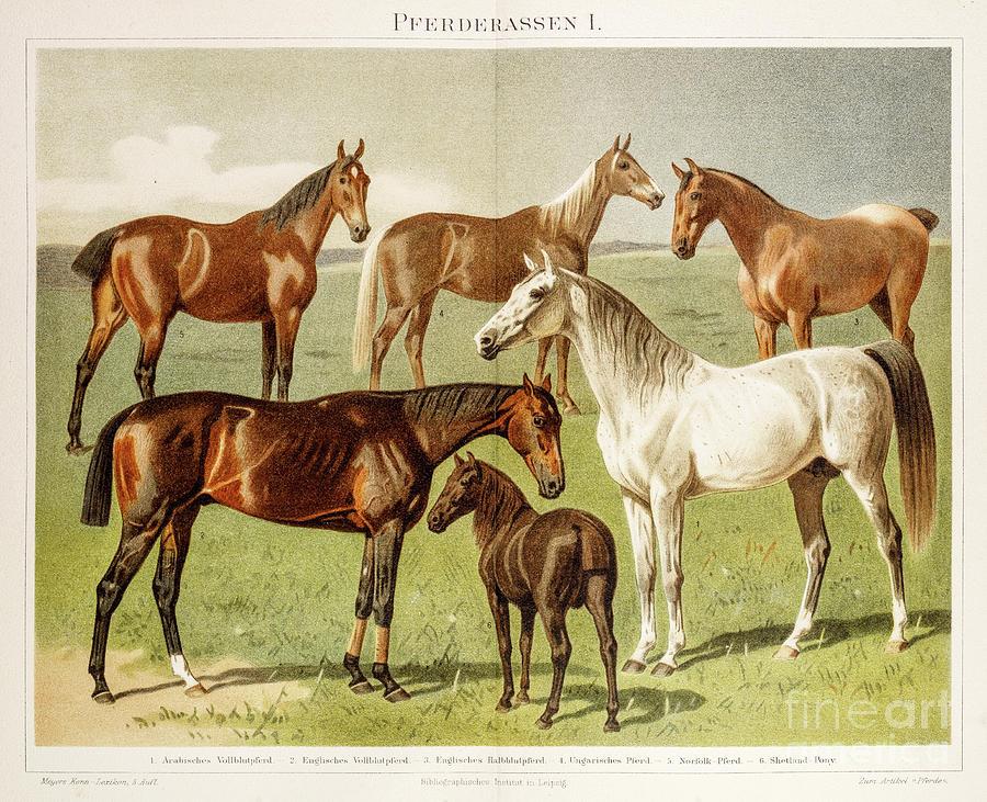 Horse Breeds Chromolithograph 1896 Digital Art by Thepalmer