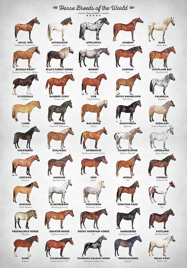 Horse Digital Art - Horse Breeds of the World by Zapista OU