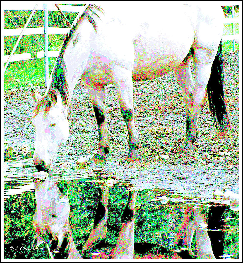 Horse Drinking from Puddle by A Gurmankin
