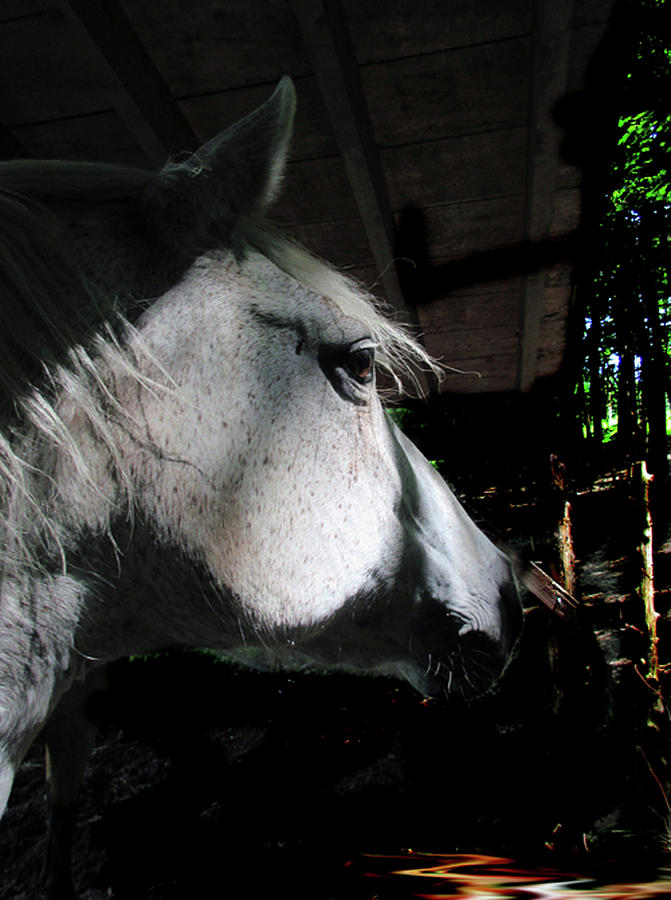 HORSE EXPRESSIONS -  Sunlight Through The Trees On The Paso Fino Mare  by Patricia Keller