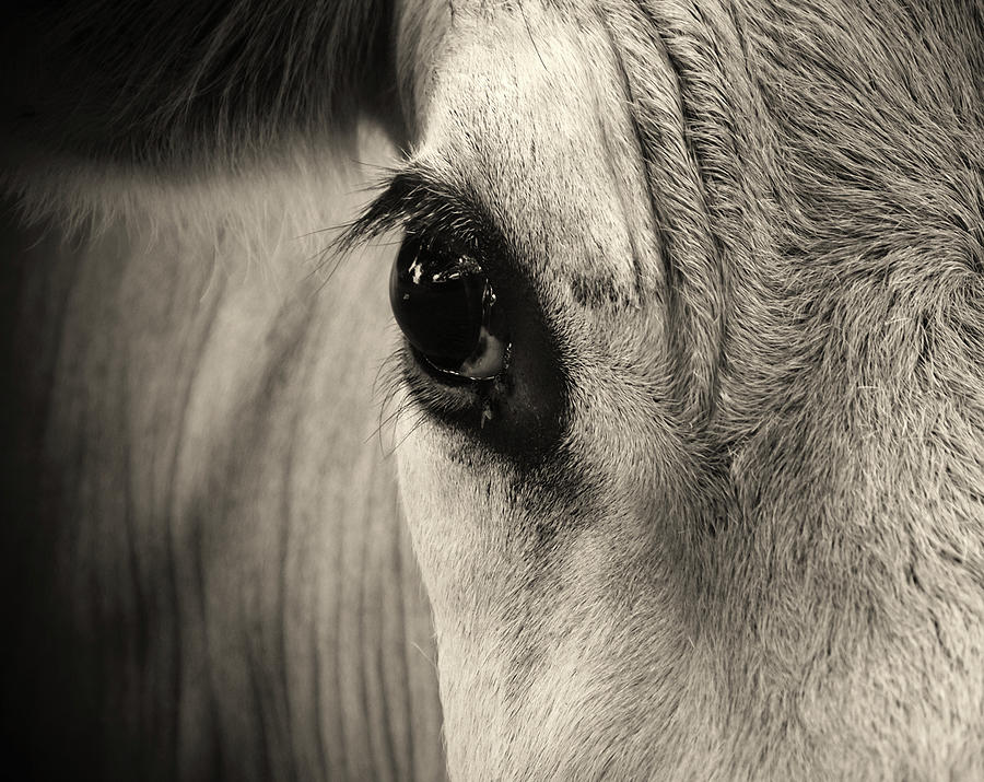 Horse Eye Photograph by Karena Goldfinch