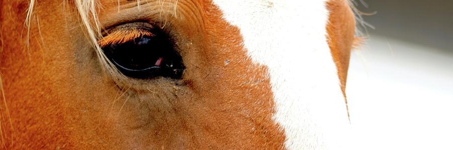 Horse Eye Lashes by Jerry Sodorff