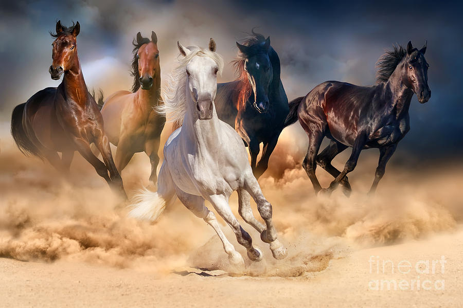 Equestrian Photograph - Horse Herd Run In Desert Sand Storm by Callipso