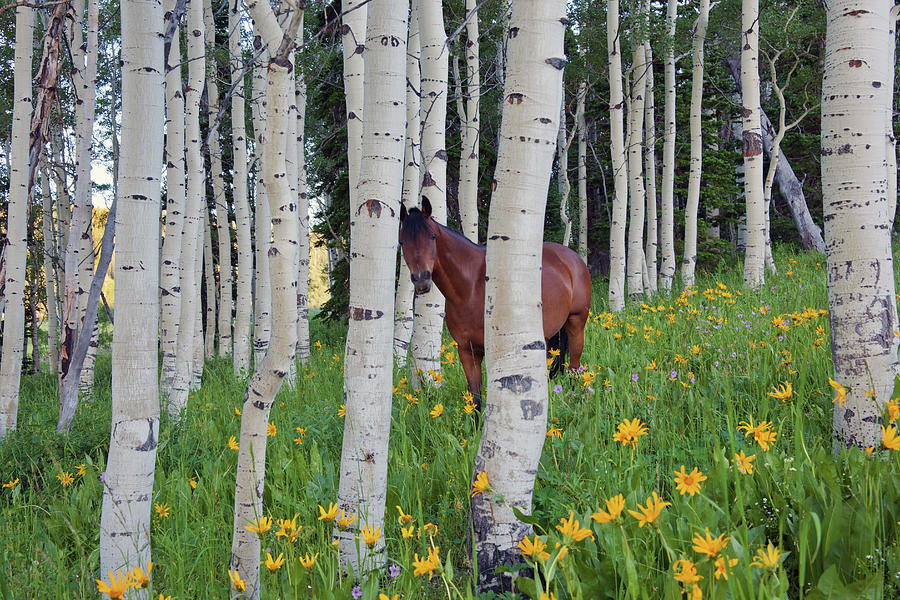 Horse In A Field Of Wildflowers And Photograph by Mint Images - David Schultz