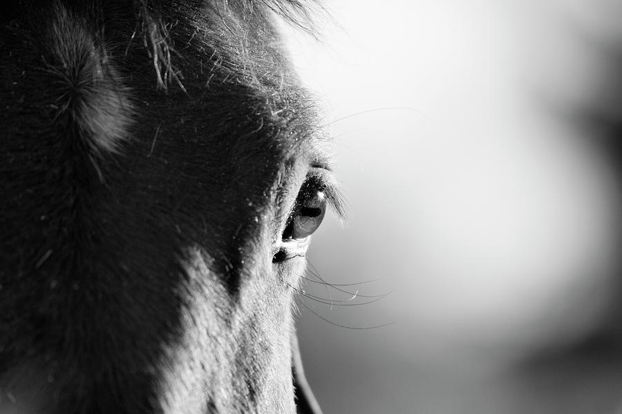 Horse In Black And White Photograph by Malcolm Macgregor