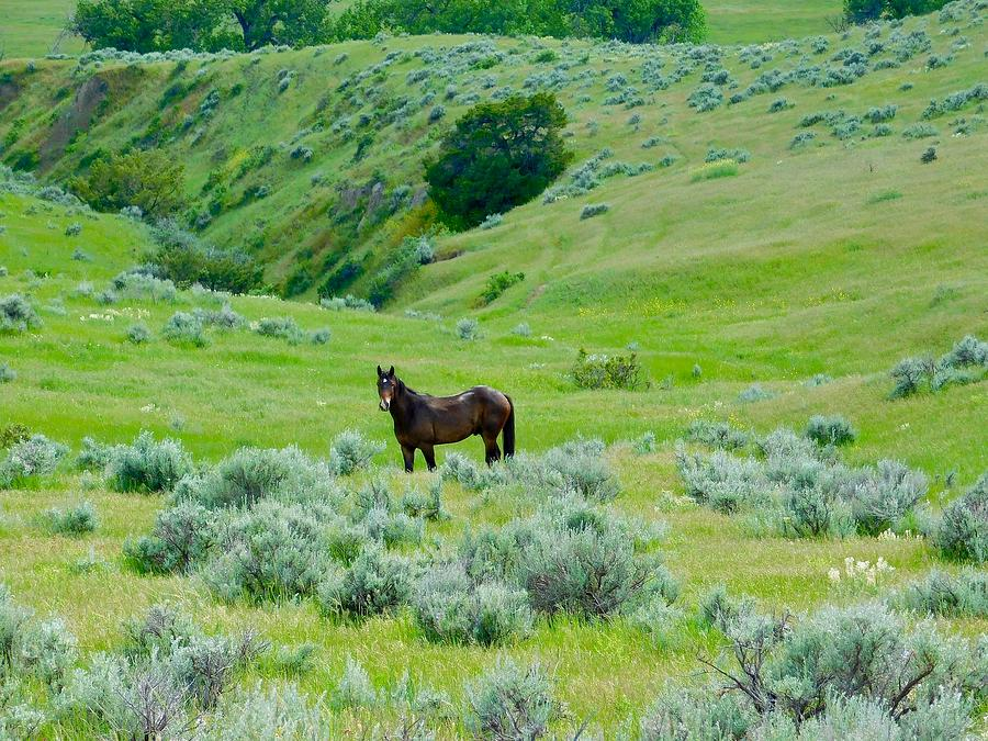 Horse in the Little Bighorn Valley by Dan Miller