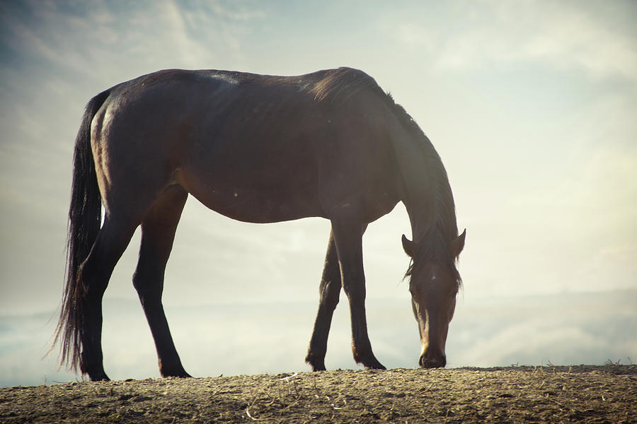 Horse In Wild Photograph by Arman Zhenikeyev - Professional Photographer From Kazakhstan