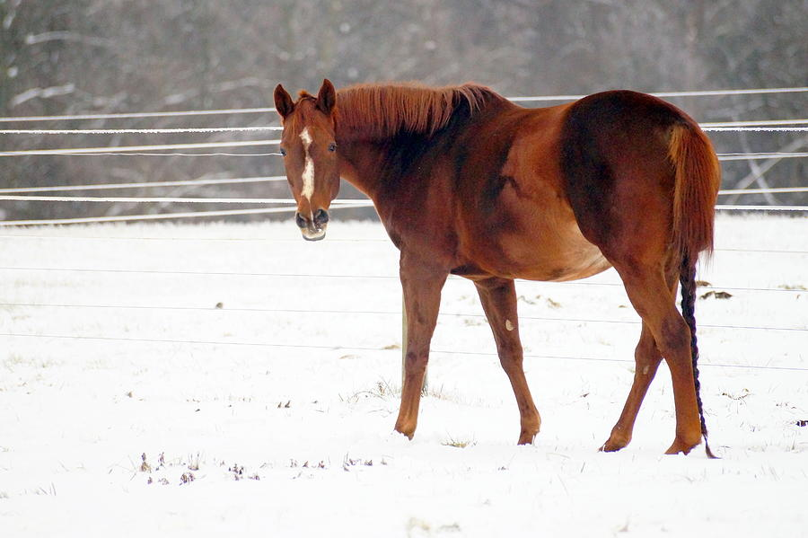 Horse In Winter by BETH COLLINS