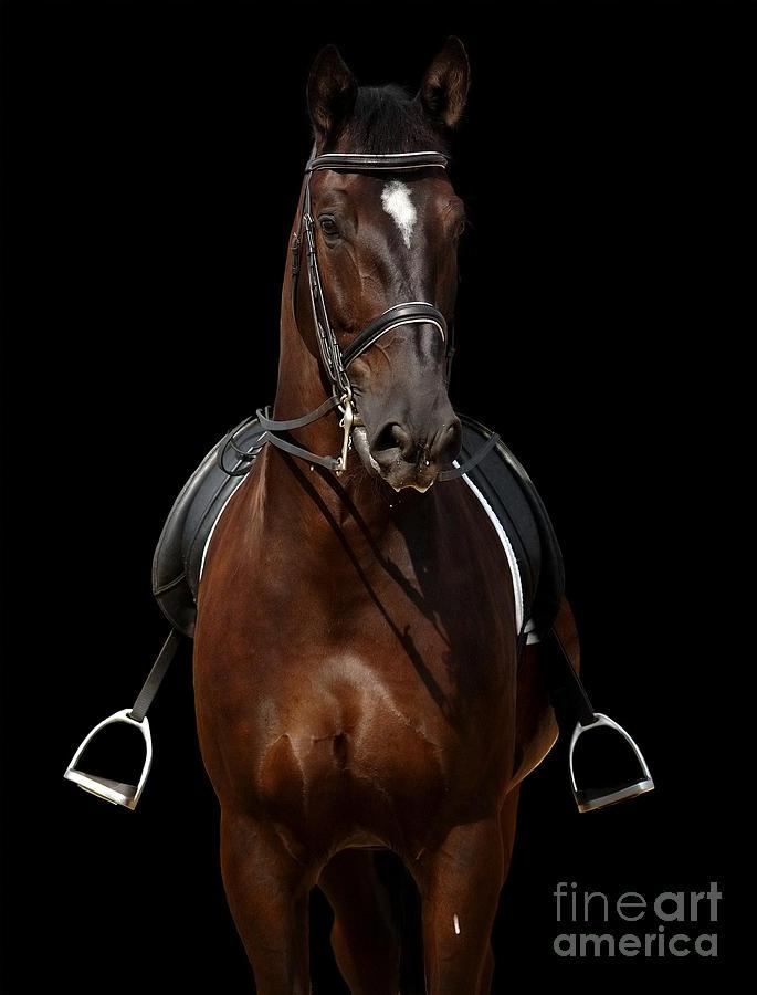 Don Photograph - Horse Isolated On Black by Abramova Kseniya