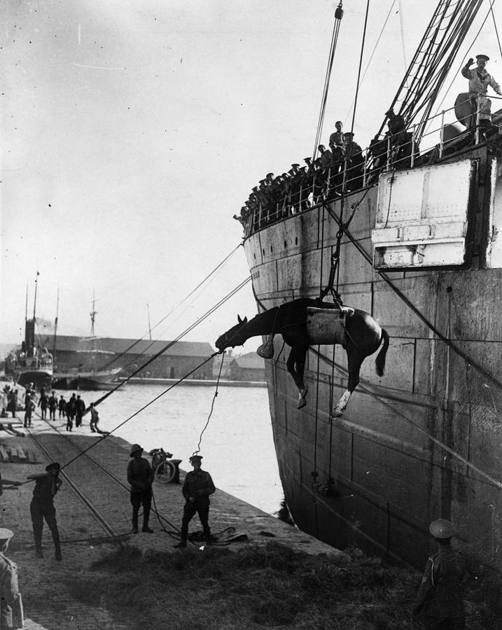 Horse Landing Photograph by Central Press