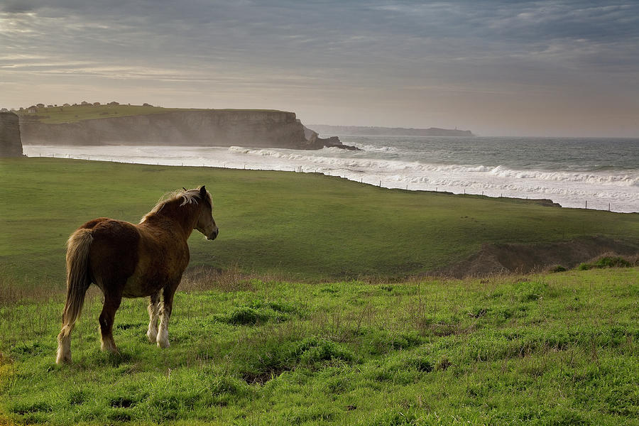 Horse Looking In Cantabria Photograph by Manuel Alvarez
