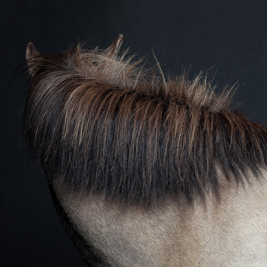 Horse Mane Photograph by Arctic-images