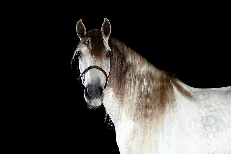 Horse Photograph by Monica Rodriguez