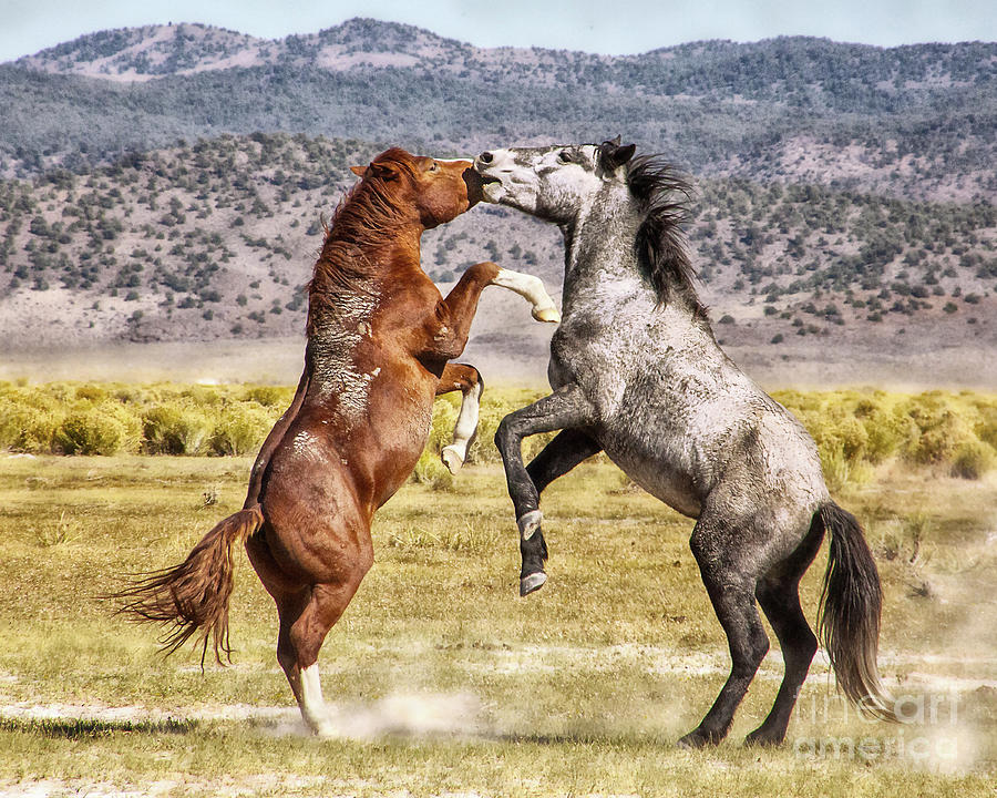 Horse Play by Jerry Cowart