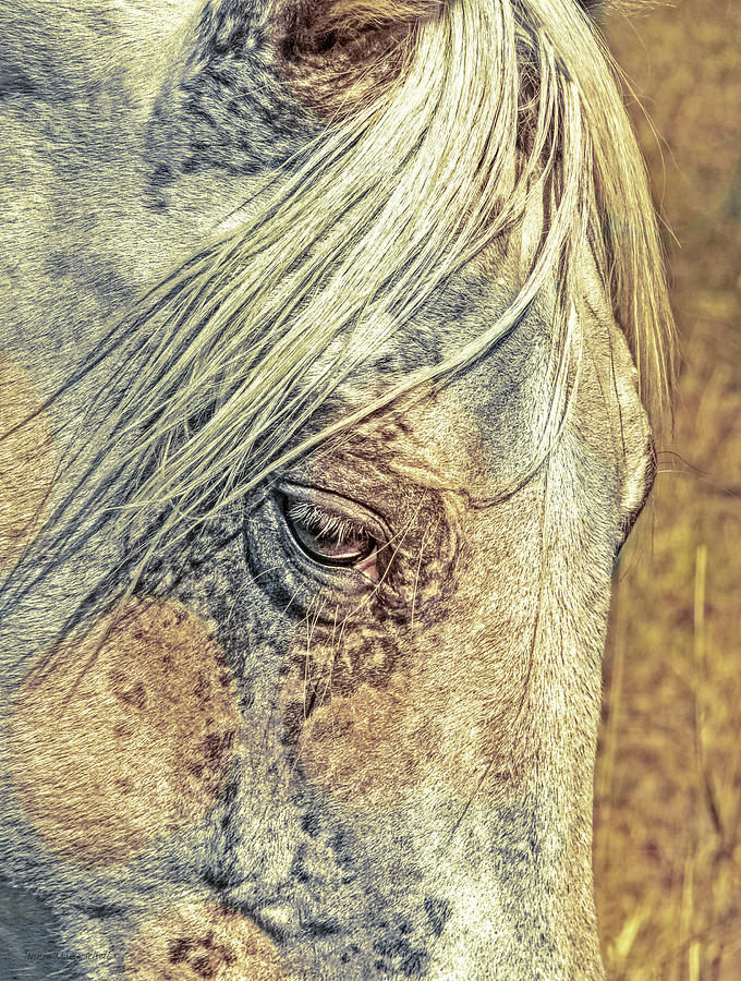 Horse Portrait Abstract Photograph