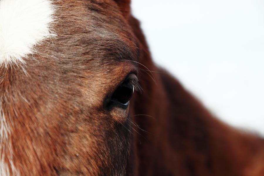 Horse Portrait Photograph by R-j-seymour