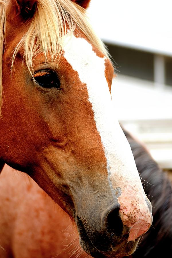 Horse Red Eyelashes by Jerry Sodorff