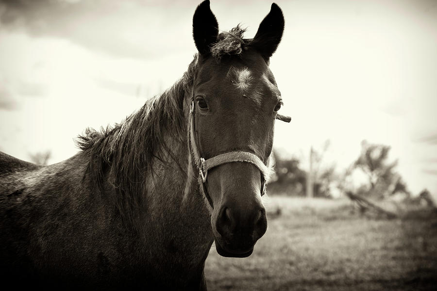 Horse Photograph by Robert A Pears