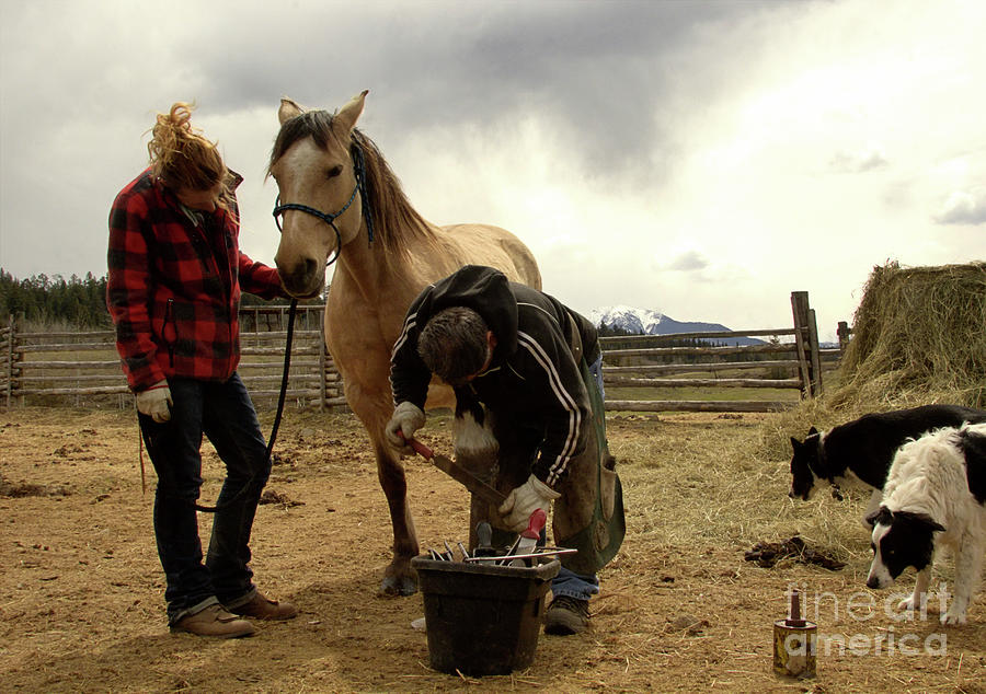 Horse Shoeing by Roland Stanke